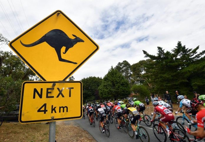TODAYCYCLING.COM - Le peloton lors du Tour Down Under. Photo : Tour Down Under