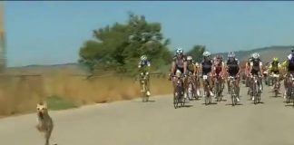 Un chien défie un peloton en rêvant du Tour de France